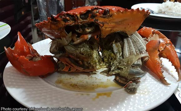 Do You Know What Crabs Eat? Find Out Now